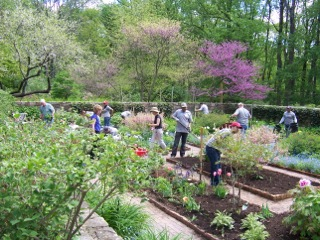 Volunteers in the garden